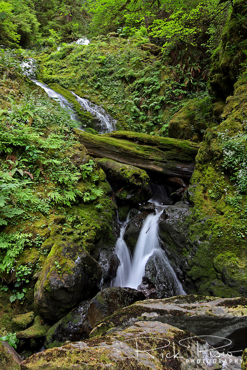 Bunch Creek Falls is located in the Quinault Rainforest of Olympic National Park.