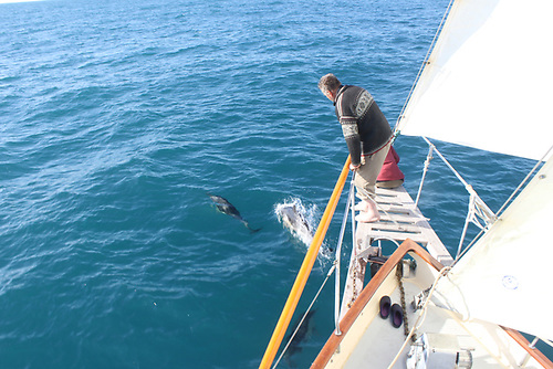 The ocean dream – Teddy self-sailing while dolphins play around the forefoot