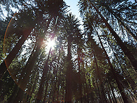 FOREST_LOCATION_90211