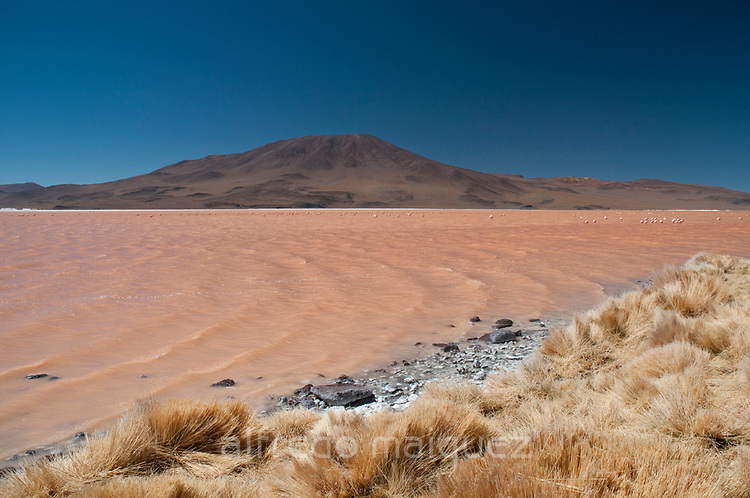 Laguna Colorada with Andean Flamingos (Phoenicopterus andinus), Reserva Nacional Eduardo Avaroa of Wildlife, Salar de Uyuni area