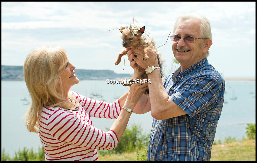 BNPS.co.uk (01202 558833)<br /> Pic: LauraDale/BNPS<br /> <br /> Lynne (60) and Rob Cox (62) with their dog Pebbles (16).<br /> <br /> A tiny pet dog that was chased over a 60ft cliff by deer survived after falling into thick brambles that cushioned her fall.<br /> <br /> Pebbles, a miniature Yorkshire terrier, plunged over the edge of the precipice and fell 60ft down a sheer drop before disappearing in thick undergrowth and bramble bushes at the bottom.<br /> <br /> Her owners, Rob and Lynne Cox, called the coastguards to their cliff-top home in Weymouth, Dorset, and Pebbles was rescued in one piece.