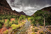 The Virgin River flowing through Zion Canyon in Zion National Park in southwestern Utah with The Watchman in the distance