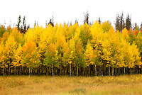 Season: Fall