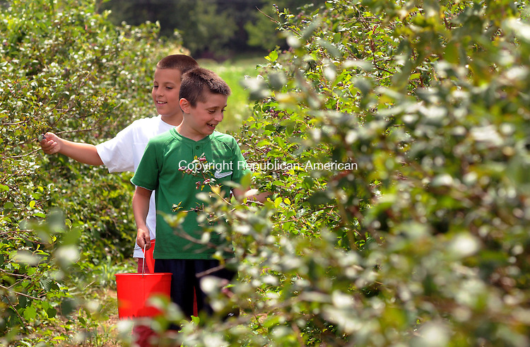 TORRINGTON, CT 25  JULY, 2010-072510JS01-Alan Vinarsky, 9, of Avon, right, and Hunter Mathis, 9, of Farmington, left, pick blueberries with their parents Sunday at Ruwet's Farm in Torrington. According to Hunter's mom, they were going to use the berries to make freezer jam. <br /> Jim Shannon Republican-American