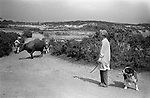 Female farmer moves cattle from one part of her farm to be milked. Disused  tin mine, near Baldhu, Chacewater , Cornwall   1978.  Scarred landscape from tin mining,