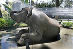 Tava, a 29-year-old female African elephant takes a shower to cool off at Six Flags Discovery Kingdom in Vallejo, CA.  During hot days, the park's elephants wet themselves before wallowing in mud; a cool shower not only cools them, but cleans them too..