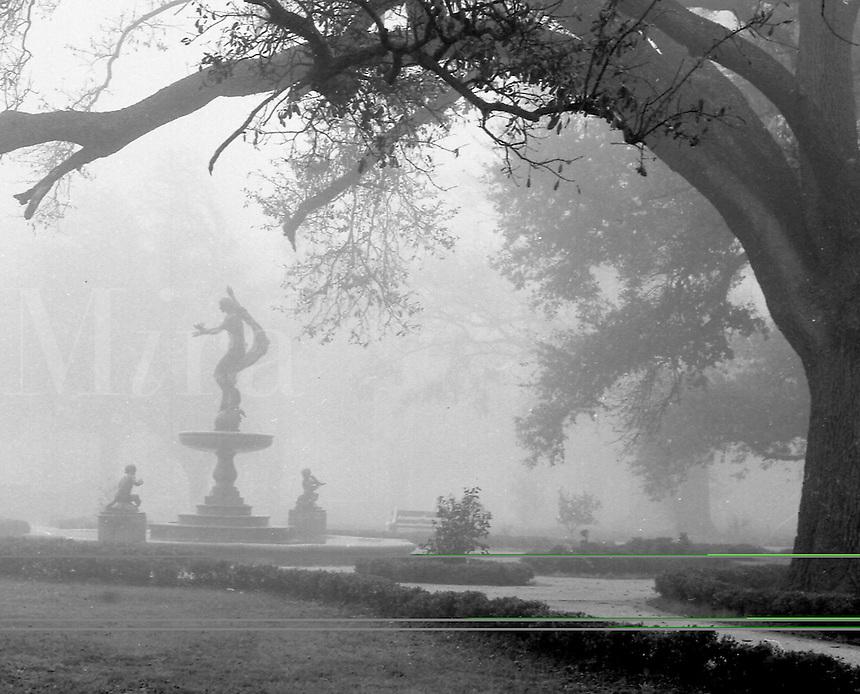 Audubon Park in the fog.