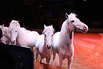 """Minature Horse perform at the Big Apple Circus """"Dance On"""" on November 18, 2010 at Lincoln Center, New York City, New York. Louise's favorite part of the circus was the chorus line of miniature horses, a big horse, dogs and goats along with all the other acts.  (Photo by Sue Coflin/Max Photos)"""