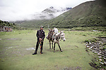 A group of nomads come to the village after twenty days in high altitude looking for mushrooms . . Jhomolhari, Bhutan June 2016