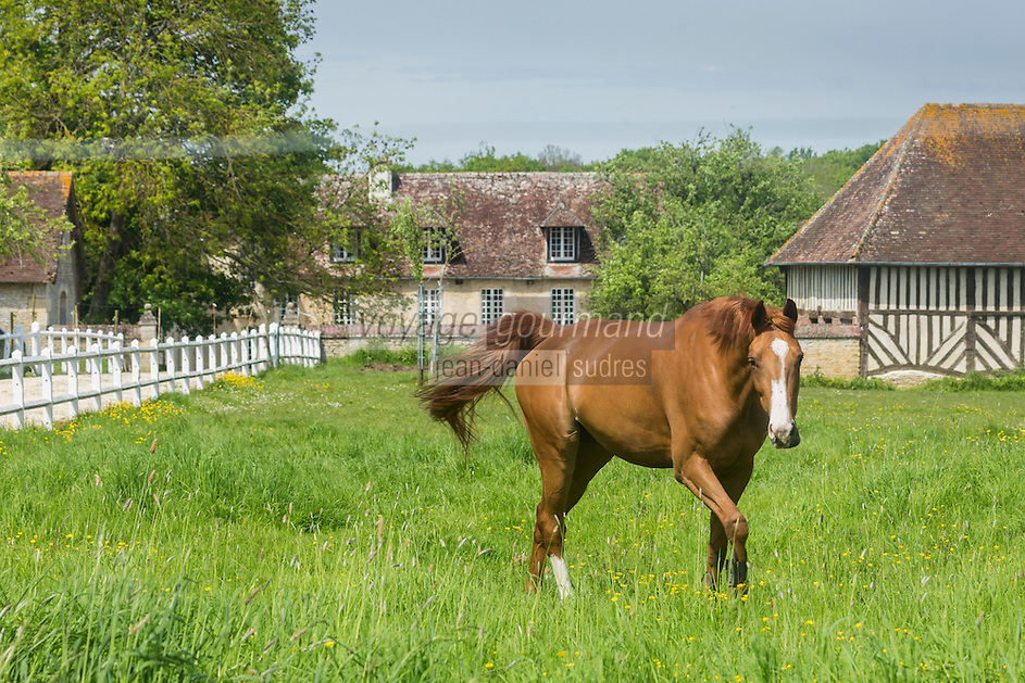 France, Calvados (14), Pays d'Auge, Mery-Corbon, Haras // France, Calvados, Pays d'Auge, Mery Corbon, stud fram