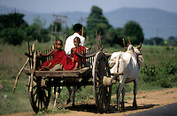BUDDHIST NOVICE MONKS TRAVELING THE TRADITIONAL WAY IN CENTRAL MYANMAR, BURMA  USING THE LOCAL OXCART,.Burma, Myanmar