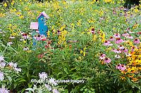 63821-206.19  Birdhouse in garden with  Black-eyed Susans (Rudbeckia hirta), Purple Coneflowers (Echinacea purpurea), Gray-headed Coneflowers (Ratibida pinnata) and Pink Bee balm (Monarda fistulosa) Marion Co. IL
