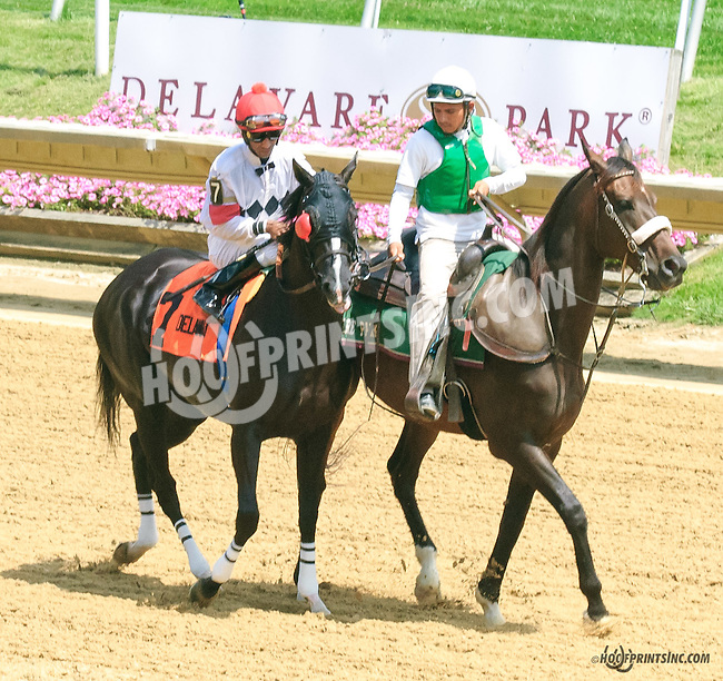 Aireofdistinction before The Dashing Beauty Stakes at Delaware Park on 7/11/15