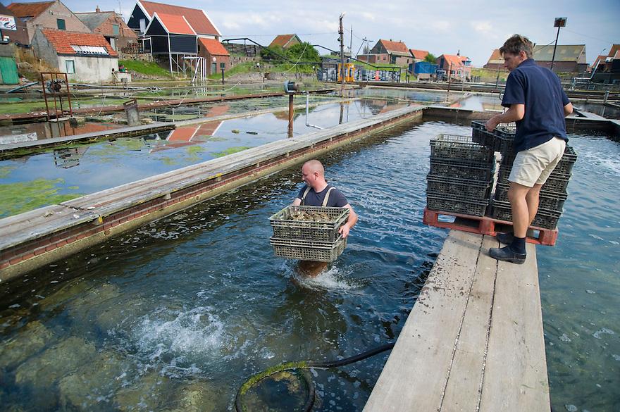 Nederland, Yerseke, 17 juni 2008.Oesterkwekers zetten kratten pasgevangen oesters in basins met schoon water.  Het is de zgn voorraadkast van de kwekers. De oesters liggen een paar dagen later op de markt of in het restaurant...Foto (c) Michiel Wijnbergh