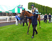 Winner of The Shadwell Racing Excellence Apprentice Handicap Handytalk ridden by Oliver Searle and trained by Rod Millman is led into the Winners enclosure during Evening Racing at Salisbury Racecourse on 11th June 2019