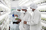 In Jain's laboratory, banana cuttings are harvested from a mother plant selected for its vigor and then incubated for nine months in jars and under climate-controlled greenhouses before joining the plantations of the region. For leaders Of this firm, the solutions<br /> By biotechnology will allow tomorrow to feed an increasing Indian population (1.3 billion today, around 1.66 billion in 2050, ahead of China).<br />