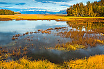 Fall foliage surrounds salt marsh on Knik Arm. Old rustic boat and snow capped Chugach Mountains in the background. Southcentral Alaska, Autumn.