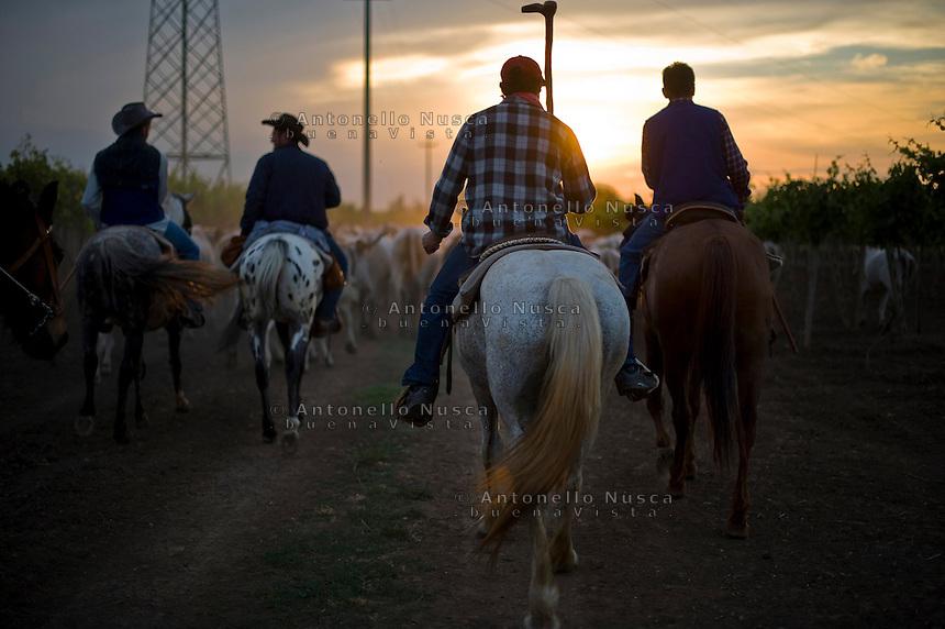 I mandriani guidano la mandria di bovini della famiglia Colantuono lungo l'antico tratturo utilizzato per la transumanza..Cowboys lead the Colantuono family's herd along the road as they venture toward a cooler climate.