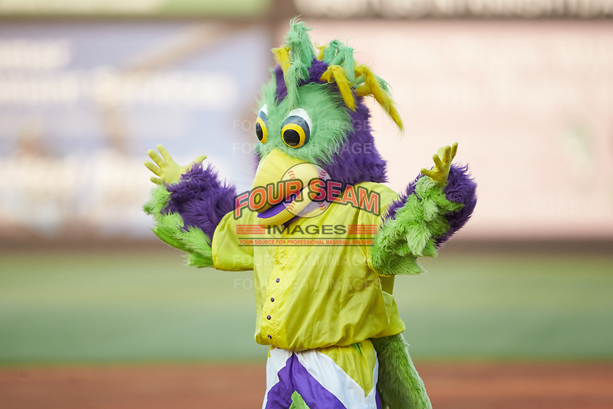 BirdZerk! entertains the fans between innings of the 2018 Carolina League All-Star Classic at Five County Stadium on June 19, 2018 in Zebulon, North Carolina. The South All-Stars defeated the North All-Stars 7-6.  (Brian Westerholt/Four Seam Images)