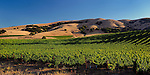Vineyard and hills near Sonoma, CA.