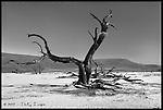 Acacia<br /> Namib-Naukluft National Park, Namibia