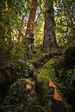 NEW ZEALAND, Karamea, A New Zealand Tramping Trail,  Ben M Thomas