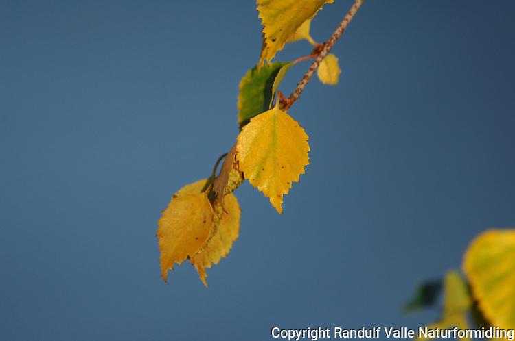 Høstfarger ---- Fall colours