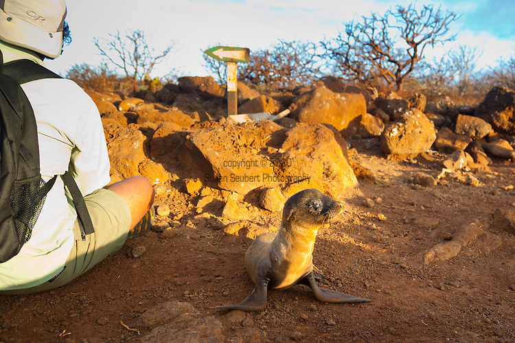 Our guide talks to us about sea lions while sitting right next to a a sea lion pup who is waiting the return of its mother, on North Seymour Island in the Galapagos National Park, Galapagos, Ecuador, South America