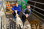 Taylor and Jamie Fahy from the Spa giving the lambs a helping hand by feeding them at the Wild Mind Festival on Sunday.
