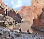 Two curious female desert bighorn sheep pass by. South Canyon and the Colorado River in Grand Canyon.