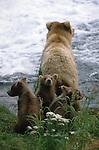 Summer Cubs