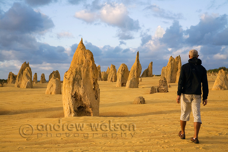 Walking amongst the limestone pillars of the Pinnacles Desert in Nambung National Park.  Cervantes, Western Australia, AUSTRALIA.