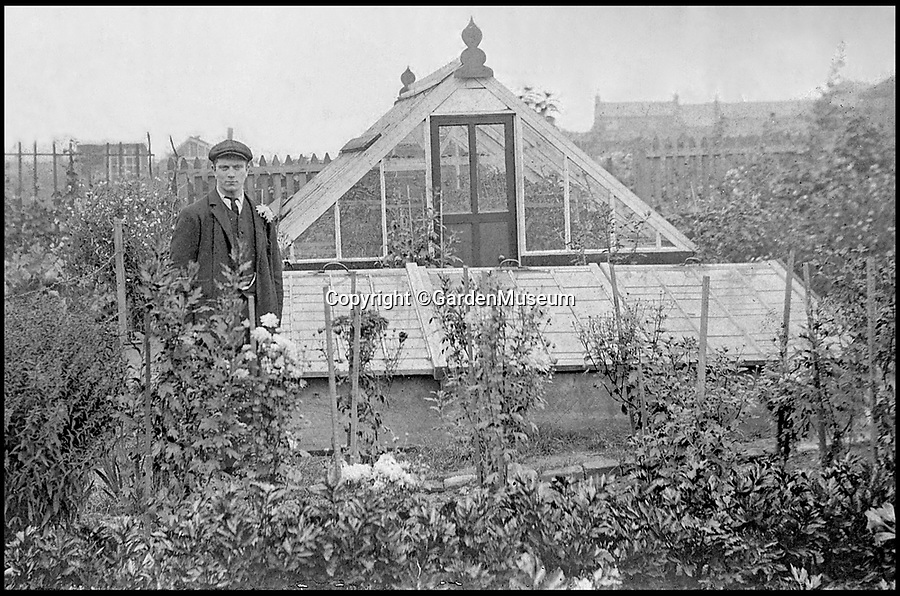 BNPS.co.uk (01202 558833)<br /> Pic: GardenMuseum/BNPS<br /> <br /> A gentleman stand in his allotment.<br /> <br /> These fascinating old pictures show that allotments have been a passion of the British for centuries.<br /> <br /> Today, more than 90,000 people are on waiting lists to get their own little patch of land to grow vegetables, and the pastime was just as popular in the early years of the 20th century.<br /> <br /> Garden historian and lecturer Twigs Way has sourced dozens of images of green-fingered Brits tending to their allotments during the 'allotment craze' amongst the middle classes sparked by the Allotments Act of 1908 which required councils to supply them when demanded.<br /> <br /> Families would decamp to the allotment on a Sunday and picnic among the cabbages, dividing tasks with the husband digging, the wife collecting crops and the children weeding or caterpillar picking.<br /> <br /> They grew cabbage, carrots, leeks, parsnips, beet, marrow and spinach while also staying faithful to the Victorian favourites seakale, salsify, scorzonera and asparagus.<br /> <br /> The allotments helped keep the British fed during the two world wars but fell out of favour in the 1960s and 1970s with elderly plot holders cast as villains in the battle to free up land for the housing boom.<br /> <br /> But, prompted by a desire amongst Brits to reconnect with the land, they are now in the throes of a full-scale revival.