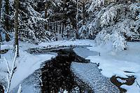 Rock Pond Brook, Pharoah Lake Wilderness Area, Adirondack Forest Preserve, New York