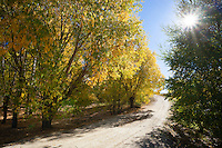 Sunburst through autumn trees at Bannockburn, Central Otago, New Zealand - stock photo, canvas, fine art print