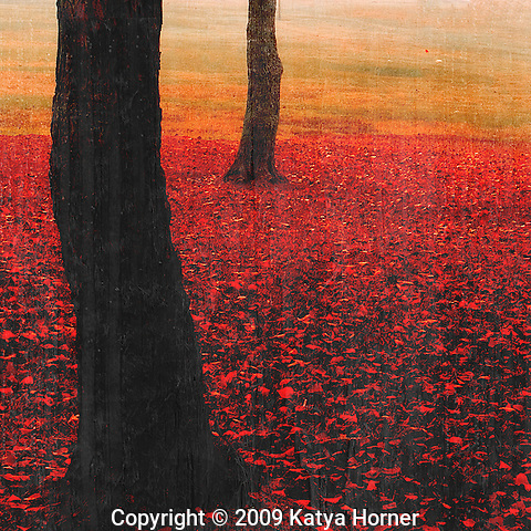 "From the Passionate Earth Series -- decorative nature photos, each with an element of ""red."""
