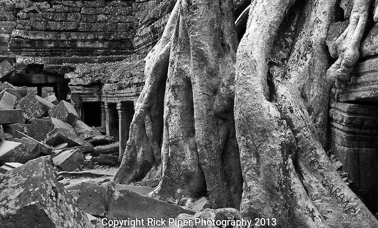 Ta Prohm Roots And Stone 14 - Silk-cotton tree roots growing over the inner enclosure Western gallery, Ta Prohm Temple, Angkor, Cambodia