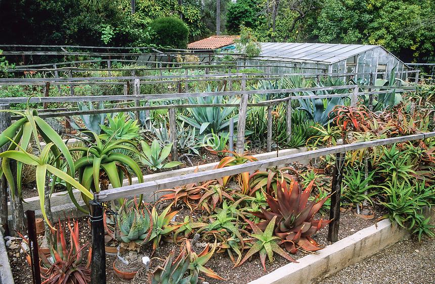 06/ Jardin botanique &quot;Les Cèdres&quot;<br /> Collection d'aloès (Aloe) et d'agaves (agave) sous chassis l'hiver.