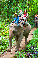 Indian elephant, Elephas maximus indicus, endangered species, subspecies of Asian elephant, Elephas maximus, Chiang Dao Elephant Training Center, Chiang Mai Province, Thailand