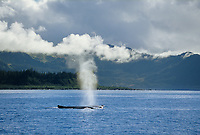 Humpback whale blow spout, Prince William Sound, Alaska