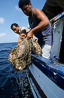 TUNISIA island Kerkennah, sponge diver, fishing boat Monastir II, sponge is a sea animal, diver collect the spong from sea ground in 20 Meter depth, after washing and cleaning the skeleton is sold as bath sponge / TUNESIEN Insel Kerkenna, Schwammtaucher Monastir II im Mittelmeer, der Schwamm ist ein Meerestier, Taucher holen den Schwamm vom Meeresboden aus ca. 20 Meter Tiefe, nach Auswaschen der Zellen erscheint das Skelett, das als Badeschwamm vermarket wird