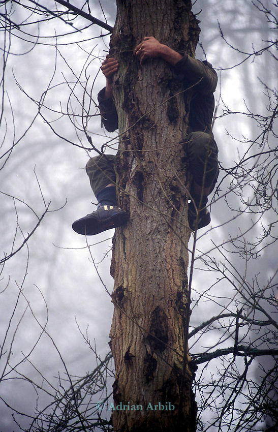 Protesters take to the trees to prevent Snelsmore common's trees from being cut  to make way  for the  Newbury  by-pass.