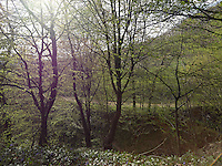FOREST_LOCATION_90185