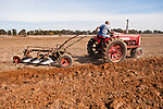 Antique tractors plowing a field in fall during the Branch 158 EDGE & TA Fall Plow Day and Plowing Seminar near Pleasant Grove, Calif...Silmer Scheidel Farm..1958 Farmall Mod. 350 tractor with 3-bottom plow