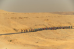 The peloton in action during Stage 4 of the Saudi Tour 2020 running 137km from Wadi Namar Park to Al Muzahimiyah King Saud University, Saudi Arabia. 7th February 2020. <br /> Picture: ASO/Kåre Dehlie Thorstad   Cyclefile<br /> All photos usage must carry mandatory copyright credit (© Cyclefile   ASO/Kåre Dehlie Thorstad)
