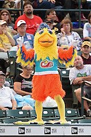 The Famous San Diego Chicken on top of the dugout during a game between the Indianapolis Indians and Rochester Red Wings on July 26, 2014 at Frontier Field in Rochester, New  York.  Rochester defeated Indianapolis 1-0.  (Mike Janes/Four Seam Images)