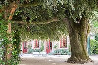 France, Indre-et-Loire (37), Chenonceaux, château et jardins de Chenonceau, le jardin vert, à l'ombre d'un gros chêne vert (Quercus ilex)