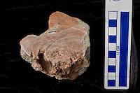 150526_RES_OConnor_termite