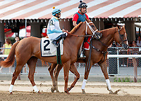 Cathedral Reader in the post parade as Dream Tree (no. 8) wins the Prioress Stakes (Grade 2), Sep. 2, 2018 at the Saratoga Race Course, Saratoga Springs, NY.  Ridden by Mike Smith, and trained by Bob Baffert, Dream Tree finished 4 1/4 lengths in front of Mia Mischief (No. 4).  (Bruce Dudek/Eclipse Sportswire)