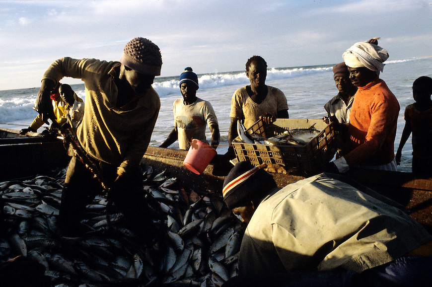 Fishermen filling box with fish